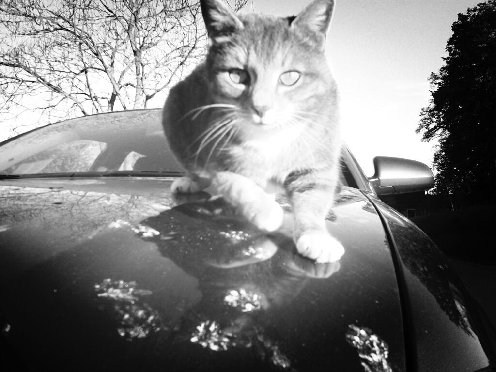 Katze auf Auto IV