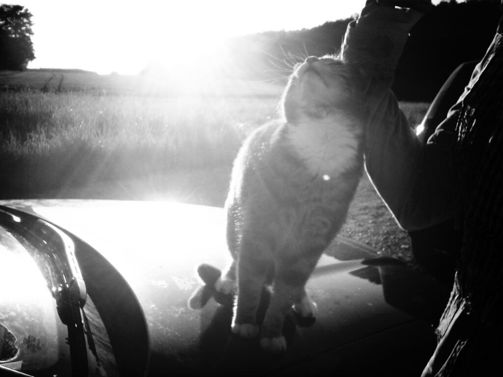 Katze auf Auto II