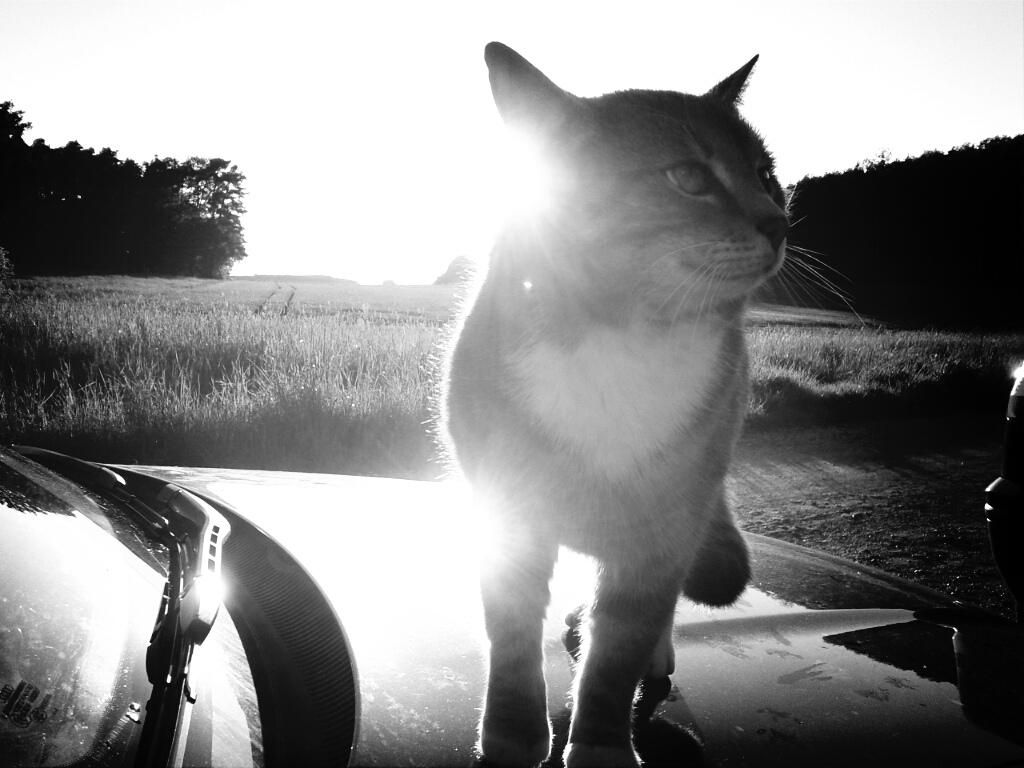 Katze auf Auto I